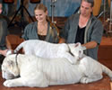 Doc Bhagavan Antle and White Tigers